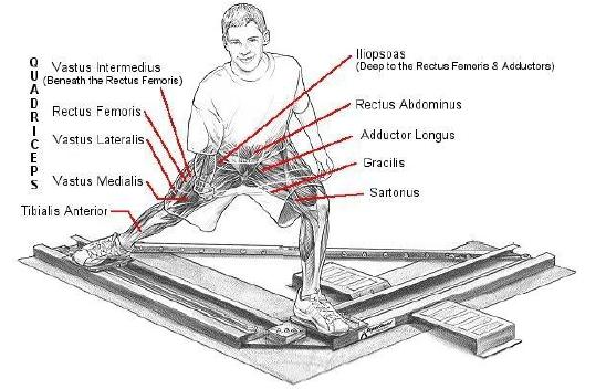 korčuľovanie vpred zaťažovane svaly