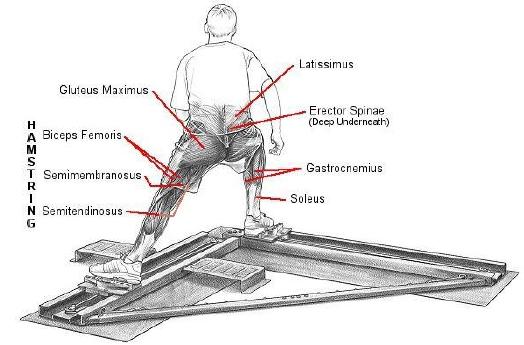 korčuľovanie vpred zaťažované svaly zadný pohľad
